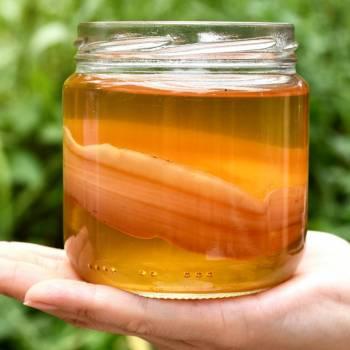Чайный гриб Комбуча